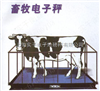 桂林畜牧电子秤,5t畜牧电子秤价格