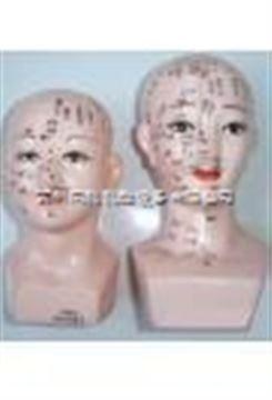 女性頭針模型