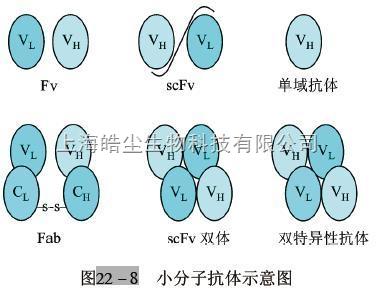 绘出igg的基本结构图