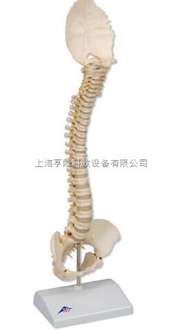新Bonelike 儿童脊柱