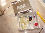 大鼠肾素ELISA试剂盒