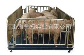 scs3T畜牧地上衡,3吨畜牧地磅秤,3T动物秤