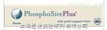 PhosphoSolution代理