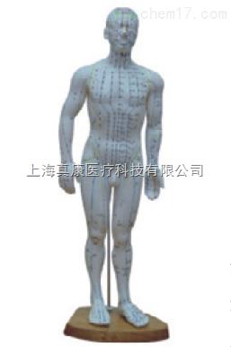 人体针灸模型 46cm 男性(PVC材质)