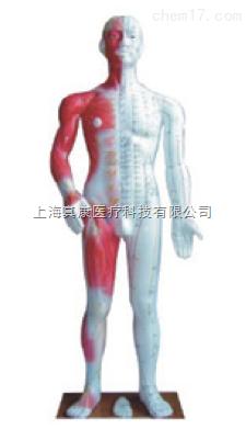 人体针灸模型(pvc材质树脂)