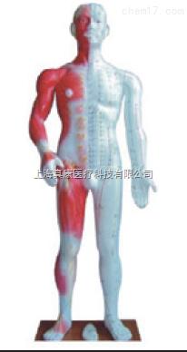 半皮肤人体针灸模型(PVC材质)
