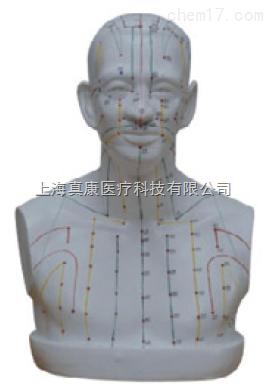 头部针灸穴位模型(PVC材质)