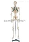 ZK-XC102A/85cm人体骨骼带分椎间盘模型