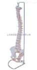 ZK-XC-105自然大脊椎模型(人体骨骼)