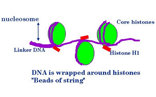 蛋白质的一级结构和测序过程ppt
