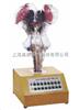 GD/A18223语音提示电动脑干模型