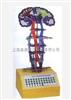 GD/A18226微电脑中枢神经传导电动模型