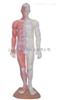 ZK-XC517A男性针灸模型(带肌肉解剖(玻璃钢树脂材质)